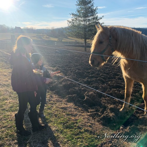 Horse-Ranch