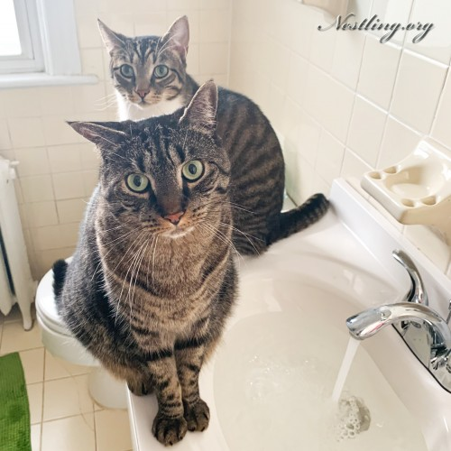 Umzug-mit-Katzen
